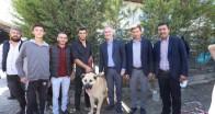 Çoban köpekleri İnegöl'de yarıştı